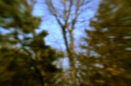 Turner Trees # 2, Conifers and Skeletons, Archival Digital Print, Various Sizes, 2004
