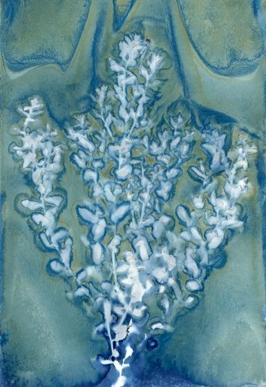 Wet Cyanotype with Acids on Watercolor Paper, 2018