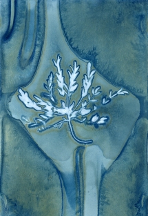 Wet Cyanotype with Acids on Watercolor Paper